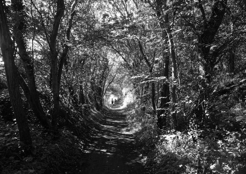 Robin Hoods Bay Railway North York Moors UK