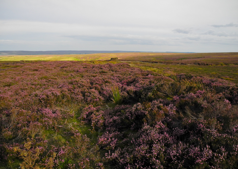 North York Moors UK