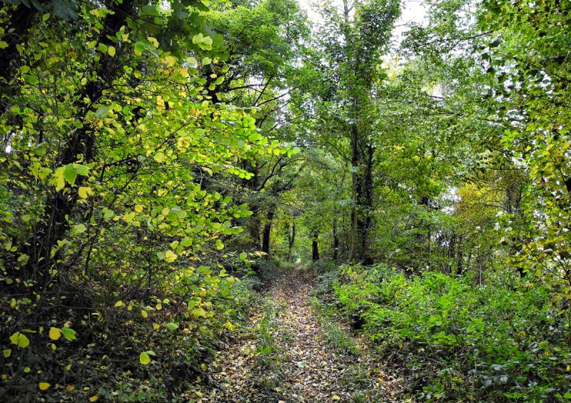 Autumn Ludlow Landscape Shropshire UK