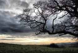 Caynham Quercus Shropshire UK