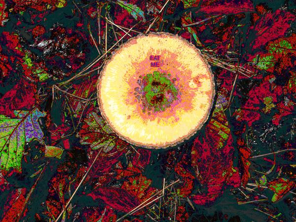 UFO Fungus Invasion UK Chemical Warfare