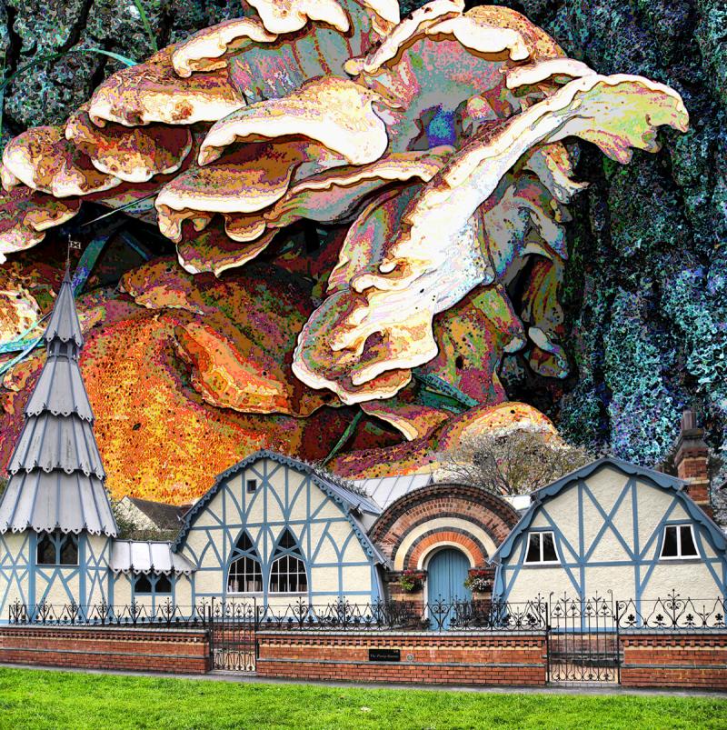 UFO Fungus Invasion UK Tenbury