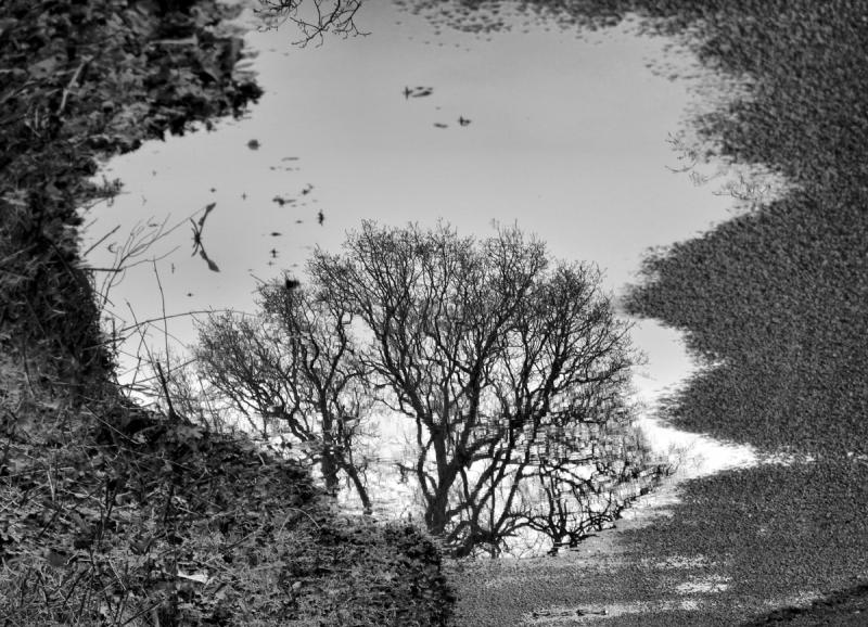 Ludlow Puddle Shropshire UK