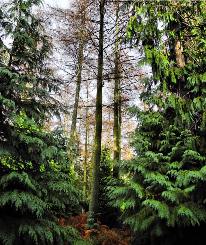 Mortimer Forest Ludlow Shropshire UK