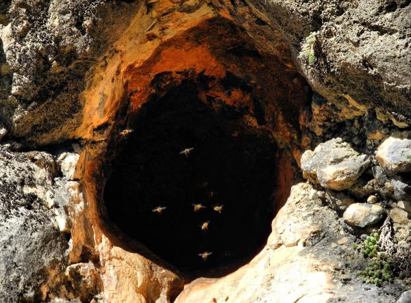 Wild bee hive Comares Axarquia Spain