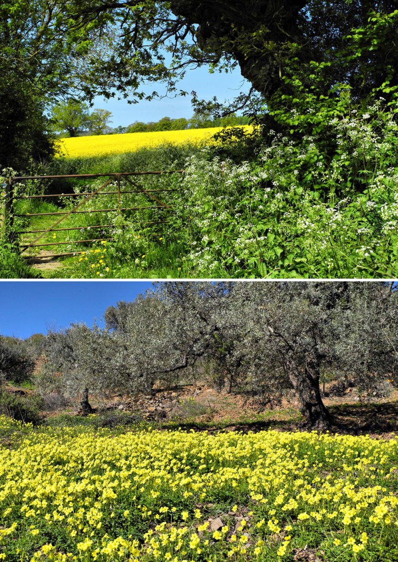 UK Spain Spring