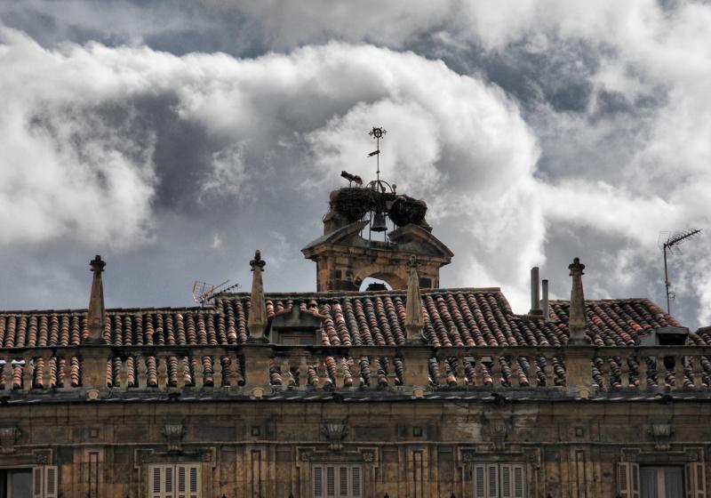 Salamanca Spain Stork