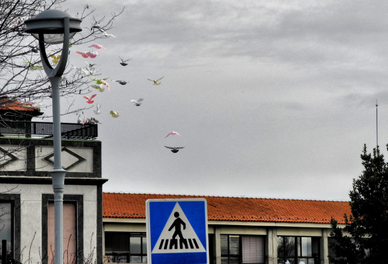 Salamanca Spain Pigeons