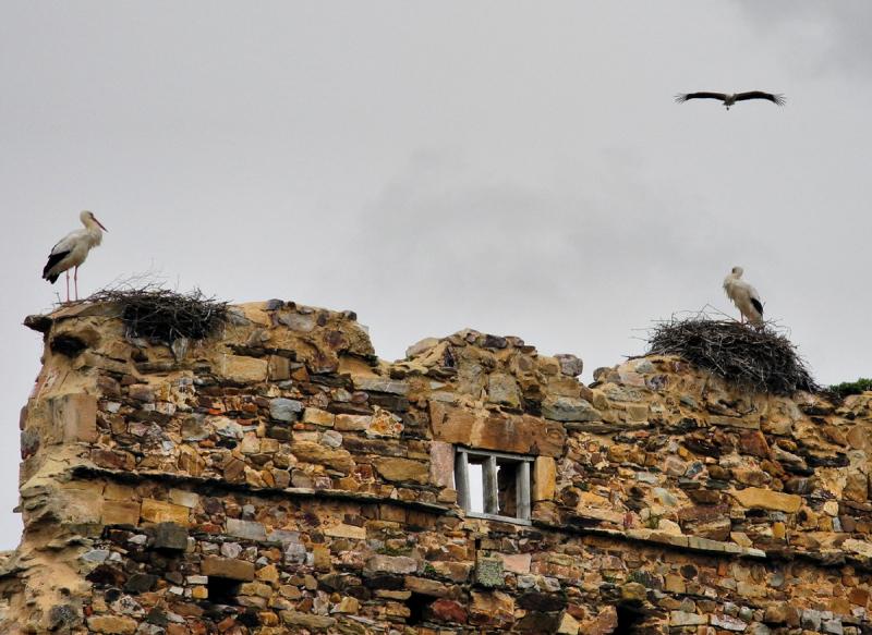 Moreruela Spain Storks