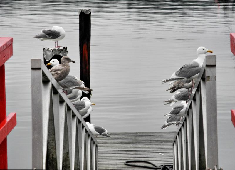 Gull Park Cortez BC Canada