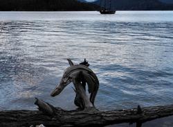 Dolphin squirrel cove cortez bc canada