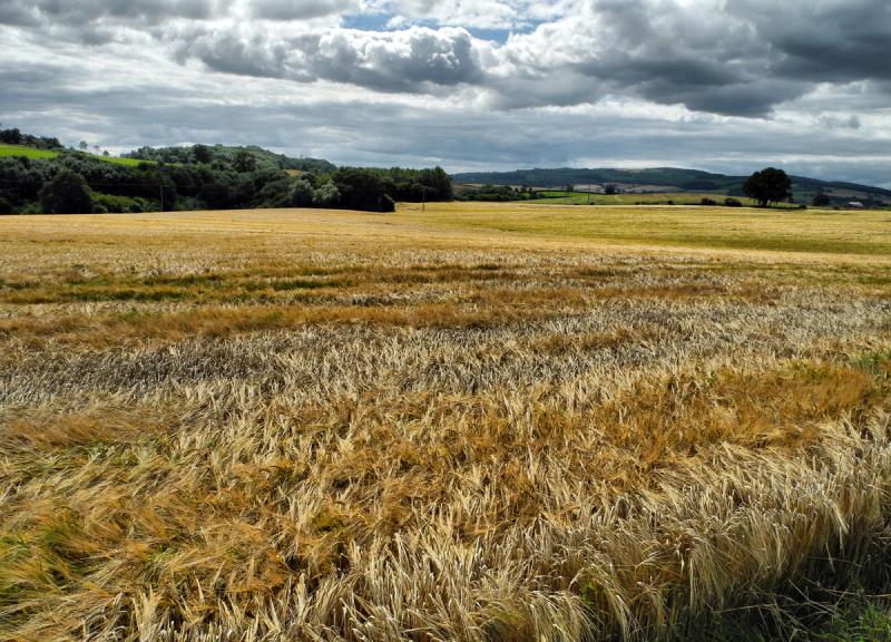 Barley Caynham Ludlow Shropshire