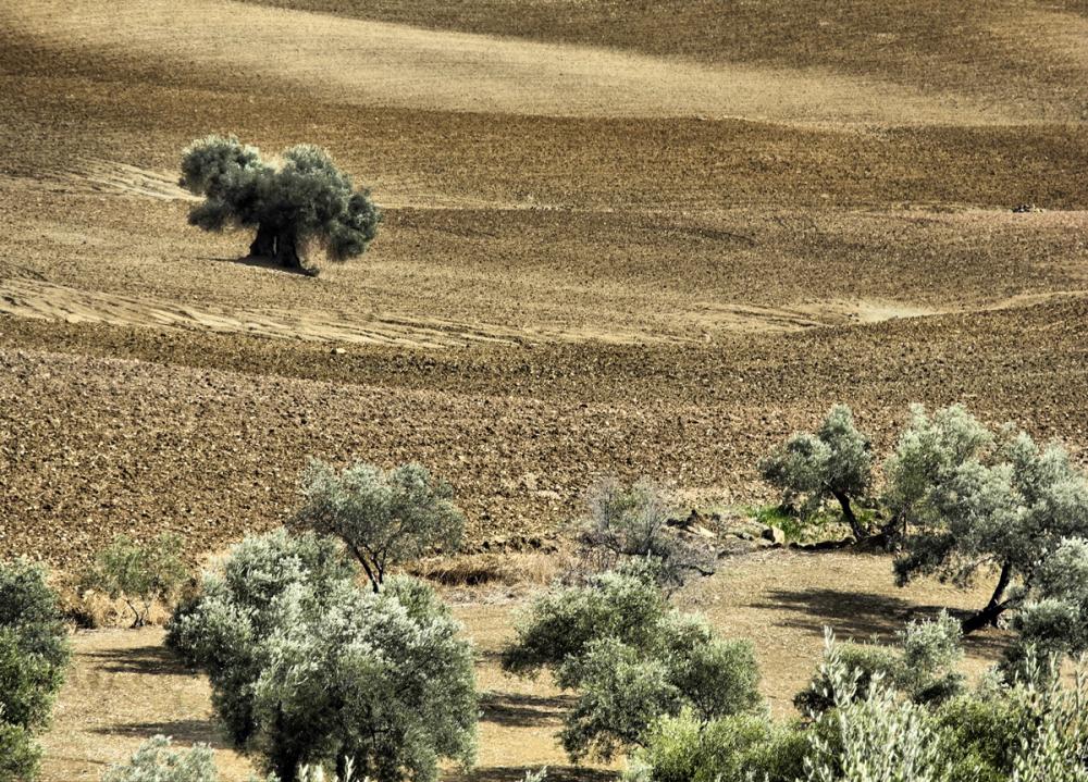 Rio Gordo Axarquia Andalusia Spain