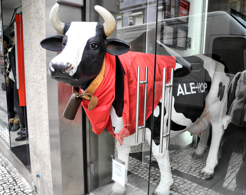 Porto Portugal Cow