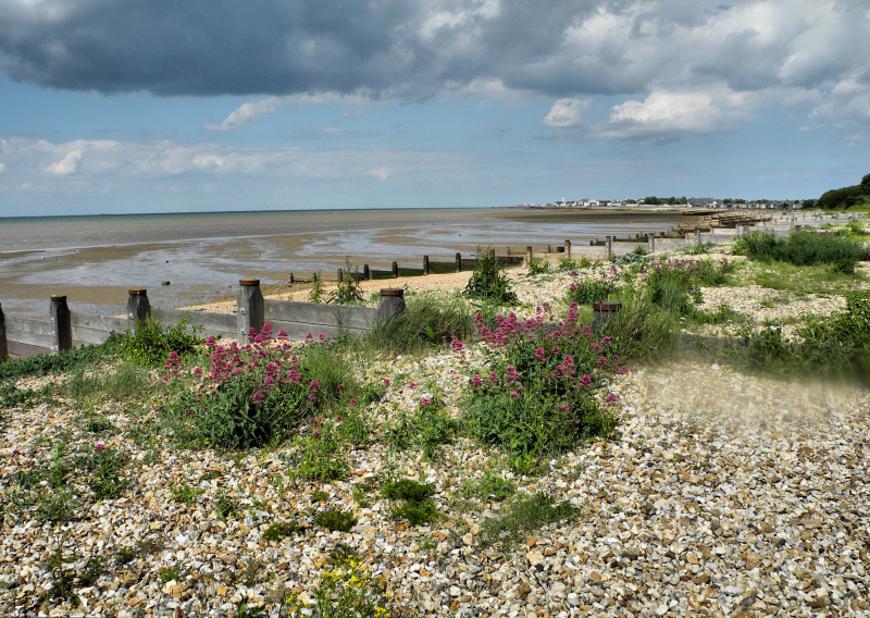 Seasalter Whitstable UK
