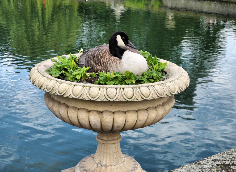 Kew Gardens Nesting UK