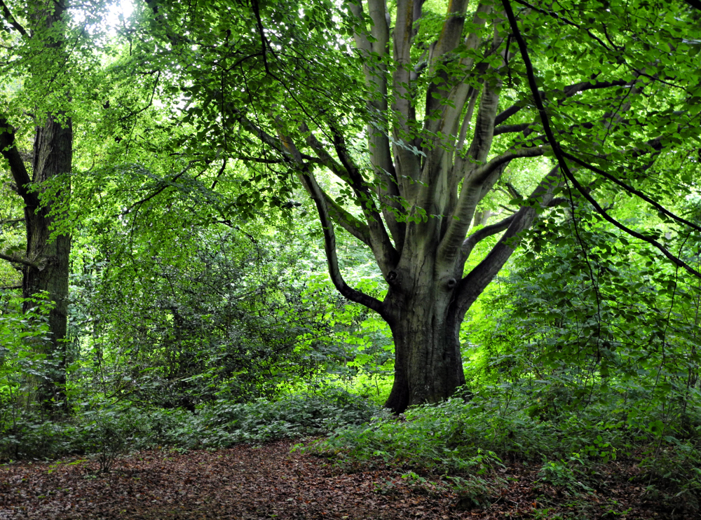 South Lakes UK Woods