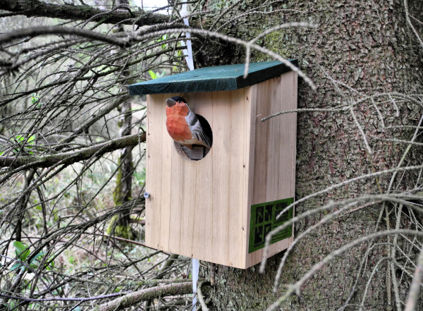 Bird Box Cache Mortimer Forest Shropshire UK
