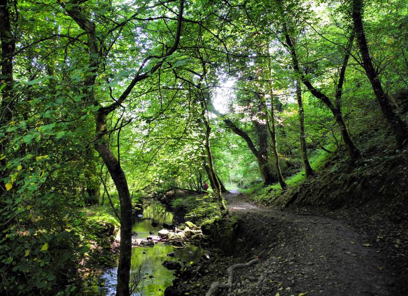 Bishopston Wood Gwyr Wales