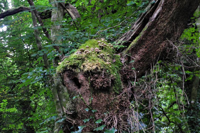 Bishopston Wood Gwyr Wales Mushrooms