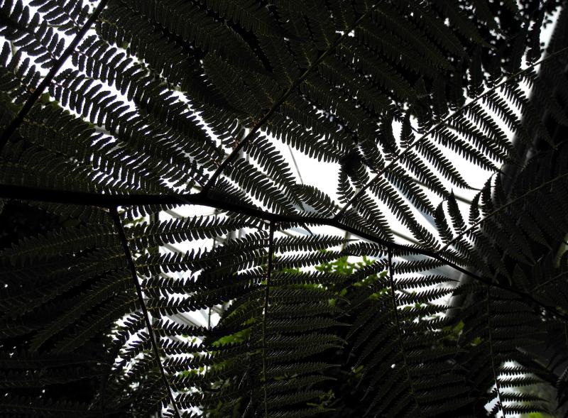 Edinburgh Botanic Gardens Ferns Scotland UK