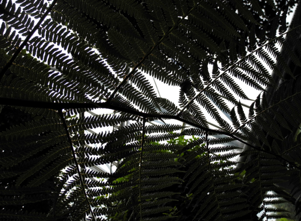 Edinburgh Botanic Gardens Ferns Scotland UK