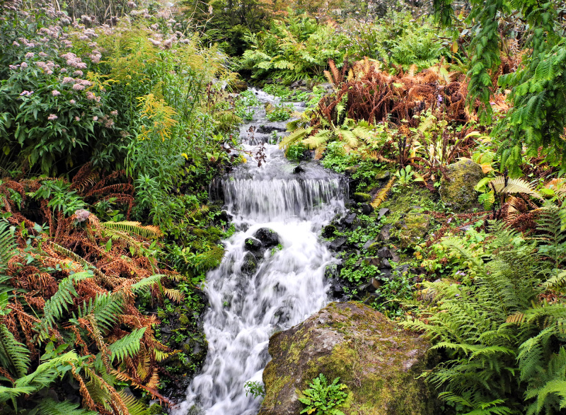 Edinburgh Botanic Gardens Stream Scotland UK