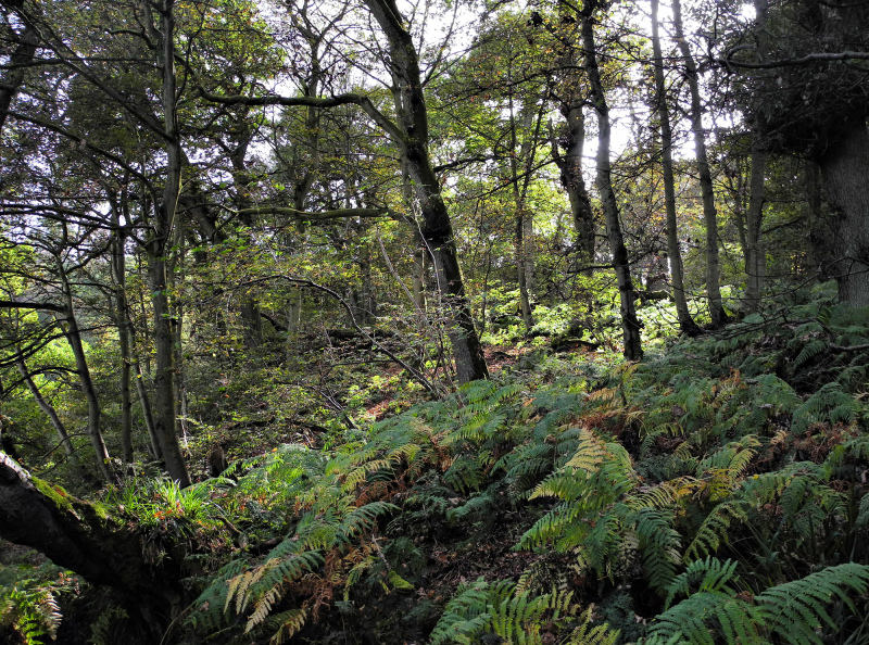 Edinburgh Rosslyn Woods Scotland UK
