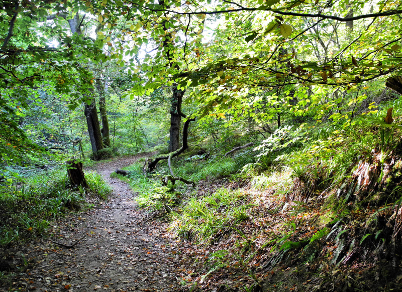 Edinburgh Rosslyn Woods Scotland UK