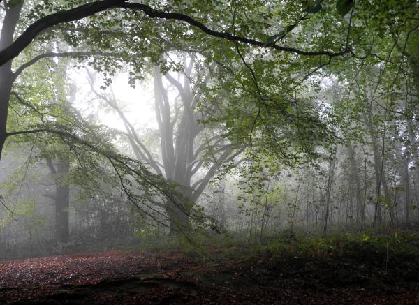Mist Ludlow Shropshire UK