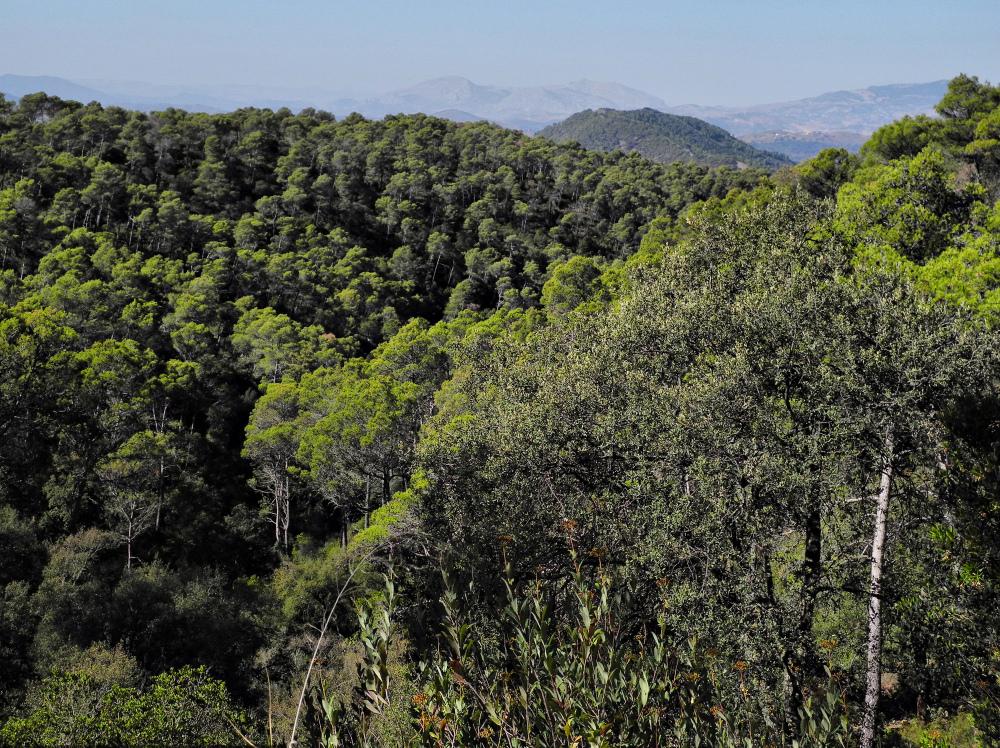 Montes de Malaga Andalusia  Spain