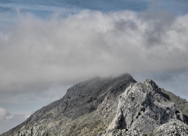 La Boquetta  Axarquia Andalusia Spain Vultures