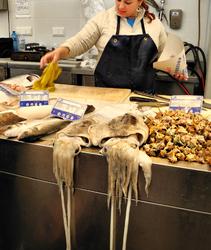 Cadiz Andalusia Spain Squid