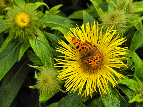 Butterfly Shropshire UK