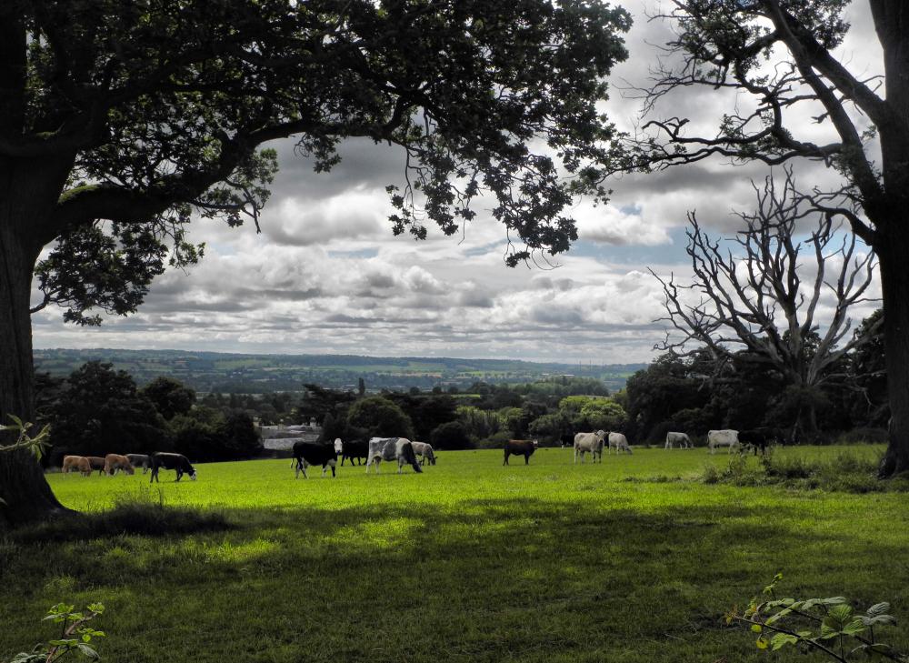 Shropshire UK Head Ludlow Starvecrow