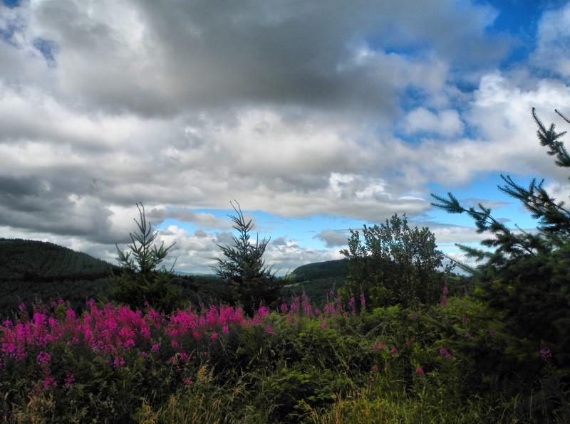Shropshire UK Ludlow Rosebay