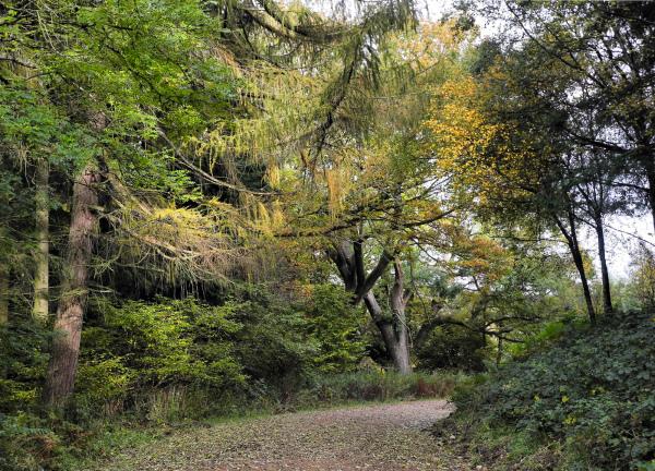 Ludlow Shropshire UK Mortimer Forest