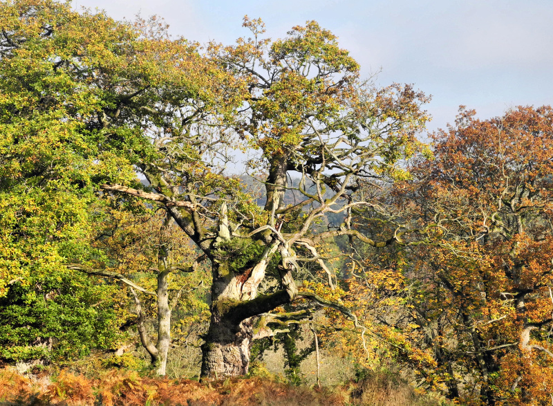 Croft Herefordshie UK