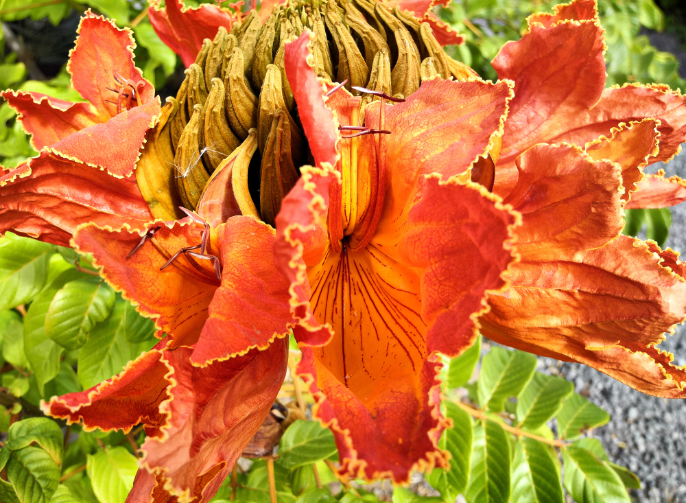 La Gomera Canaries Spain Flower