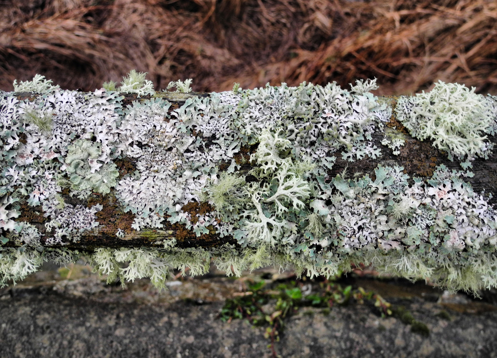 Anglesey Wales UK Red Wharf Bay Lichen