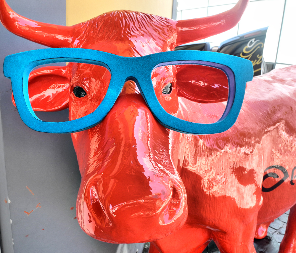 Madeira Funchal Cow
