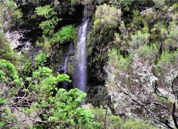 Madeira Levada Rabacal