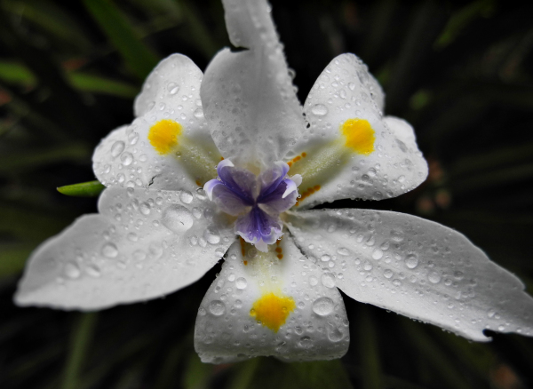 Madeira Bloom