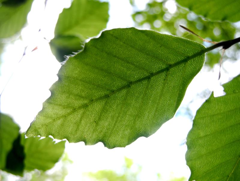 Ludlow Shropshire UK Leaf