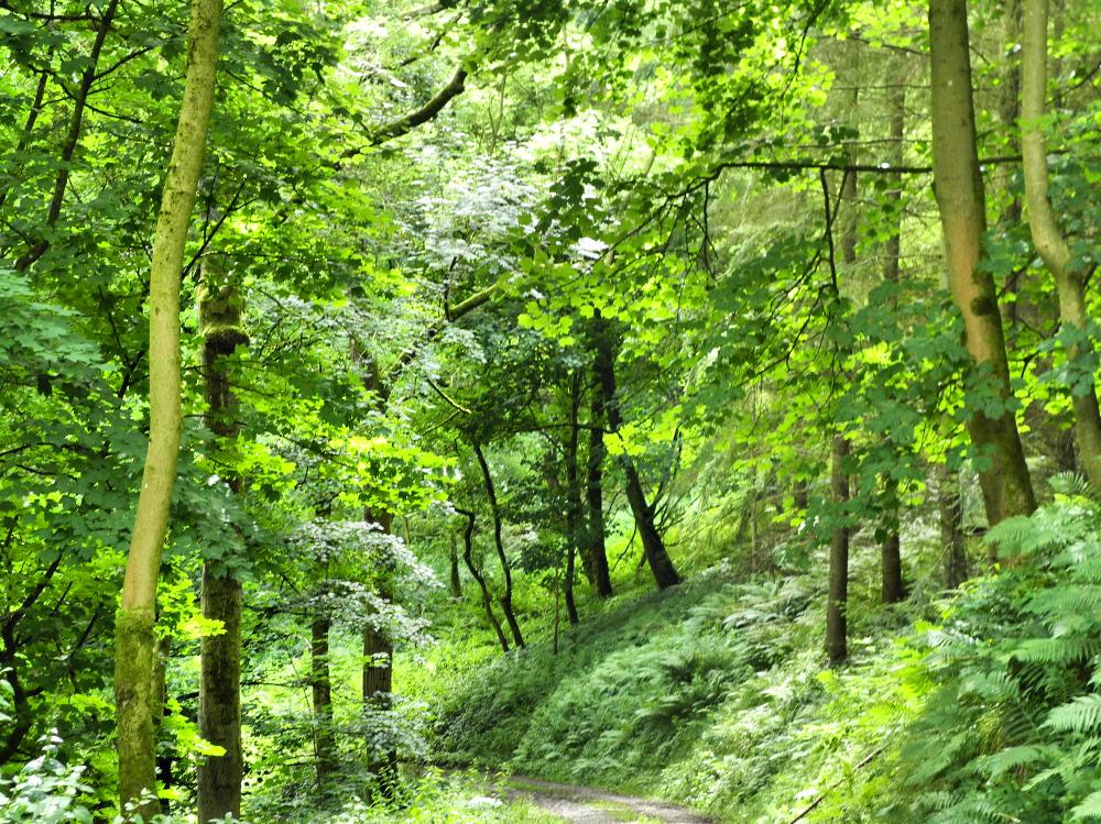 Ludlow Shropshire UK Whitcliff