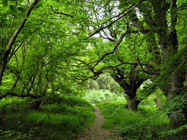 Ludlow Shropshire UK Deepwood