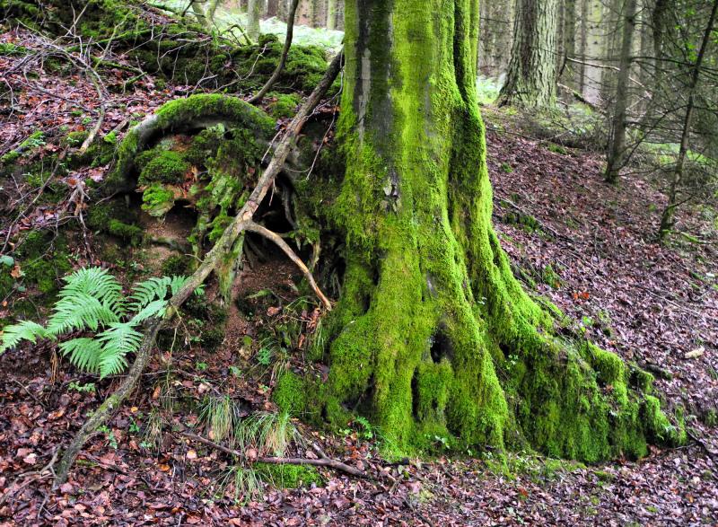 Ludlow Shropshire UK Mortimer Forest Moss