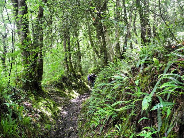 Cornwall Duloe Woods