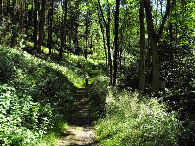 Ludlow Shropshire UK Sunny Dingle