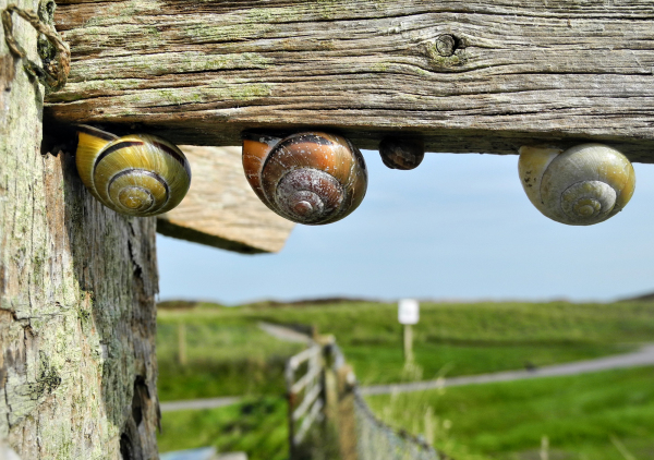Snails Penally Wales UK